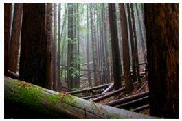mendocino_forest